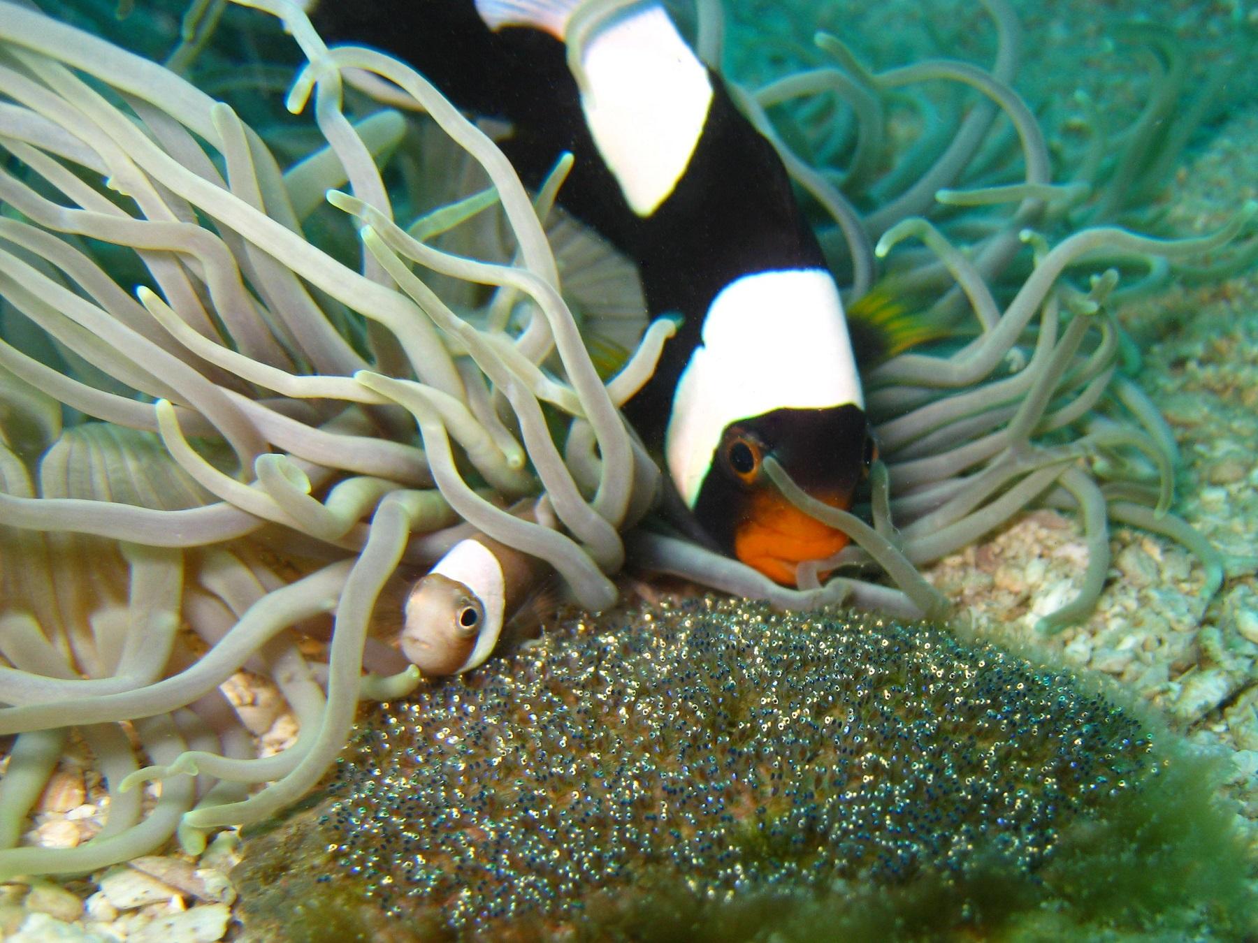 anemone-11